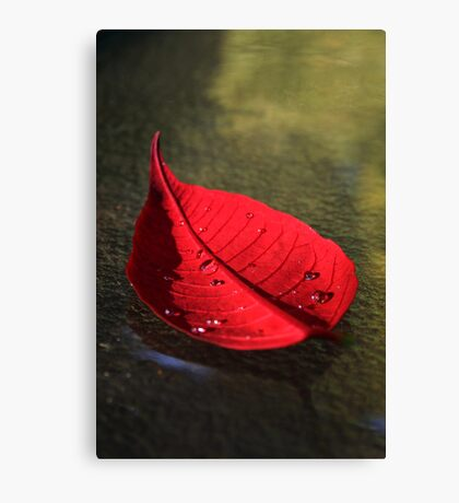 Red Pointsettia Canvas Print