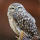 Burrowing Owl by Robert Abraham