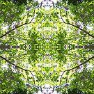 Botanic Kaleidoscope #3 by Craig Watson