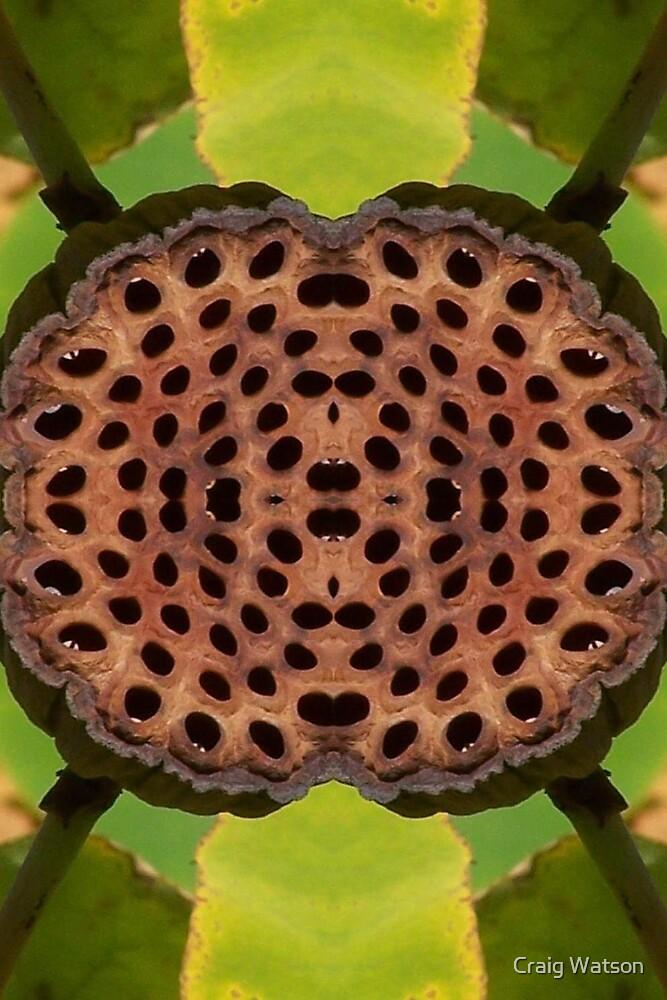 Botanic Kaleidoscope #10 by Craig Watson