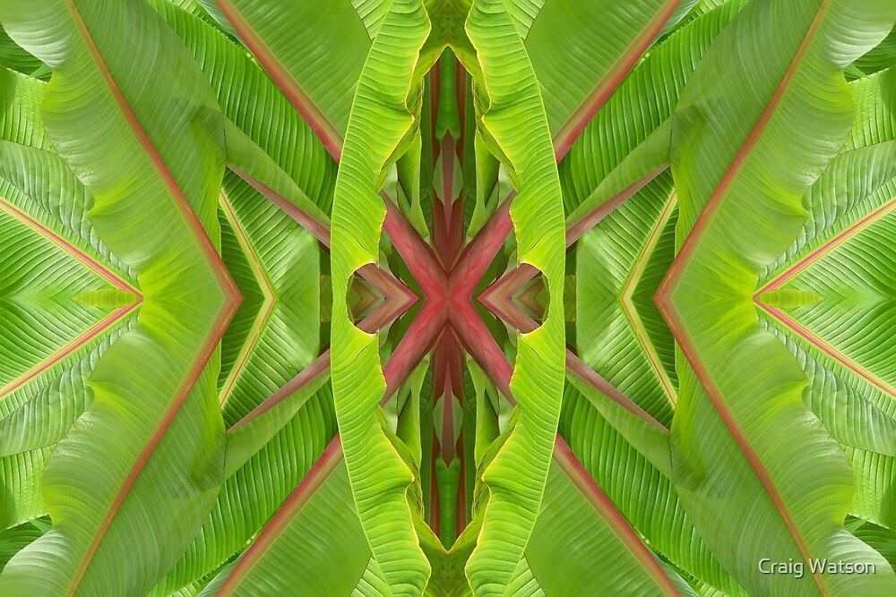 Botanic Kaleidoscope #11 by Craig Watson