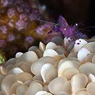 Purple jewel by David Wachenfeld