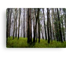 Tall trees in the Mist Canvas Print