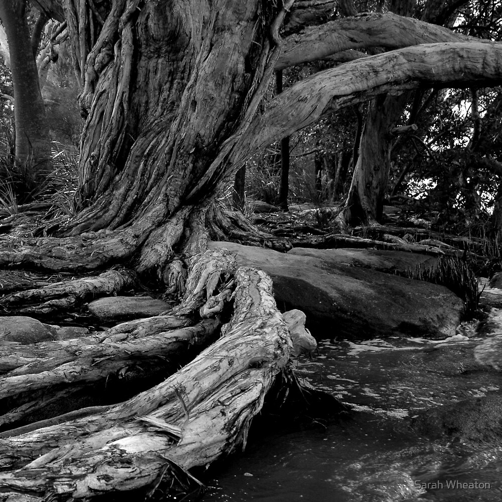 tea tree by Sarah Wheaton