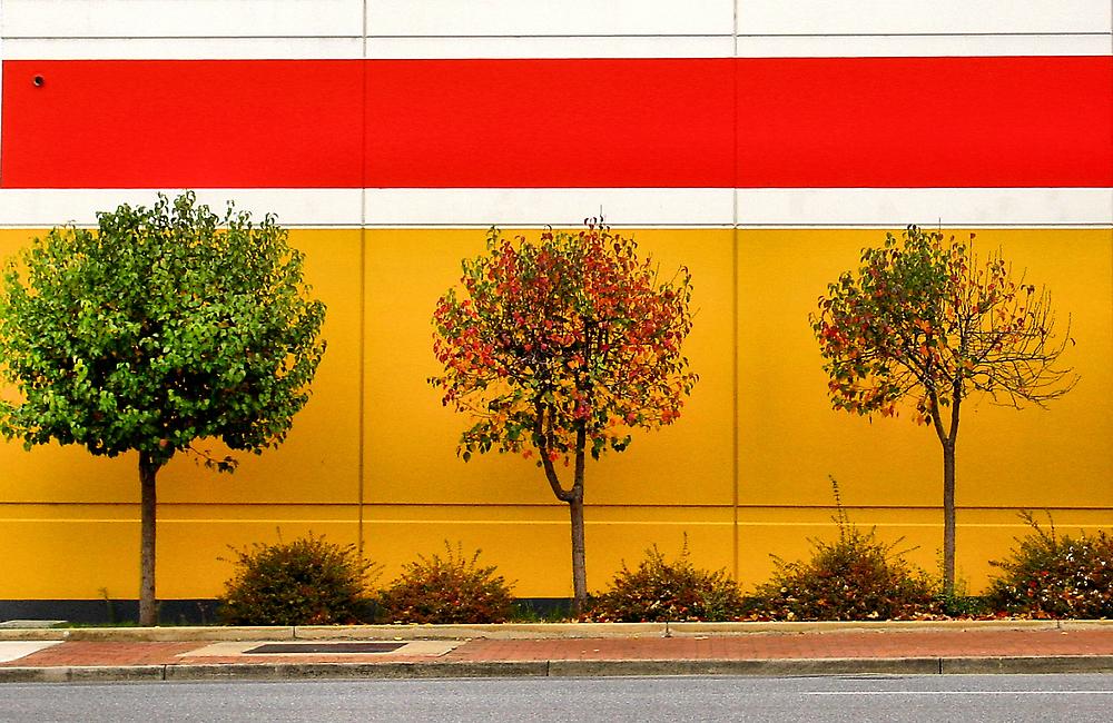 autumn progression by Janet Leadbeater