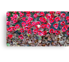 Remembrance Poppies 2014 Canvas Print