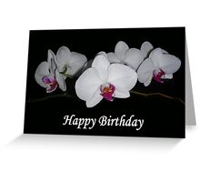 White Orchids  Greeting Card