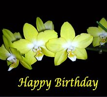 Yellow Orchids (Birthday Card) by C J Lewis
