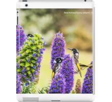 New Holland honey eaters - Warrnambool iPad Case/Skin
