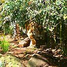 Sumatran Tigress by Sandra Chung