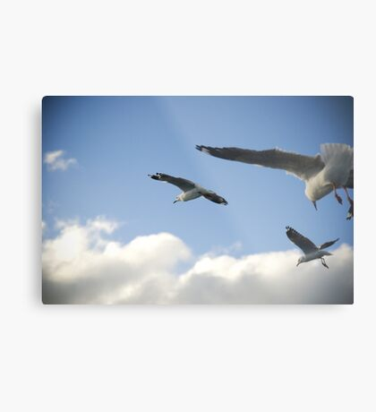 seagull squadron Metal Print