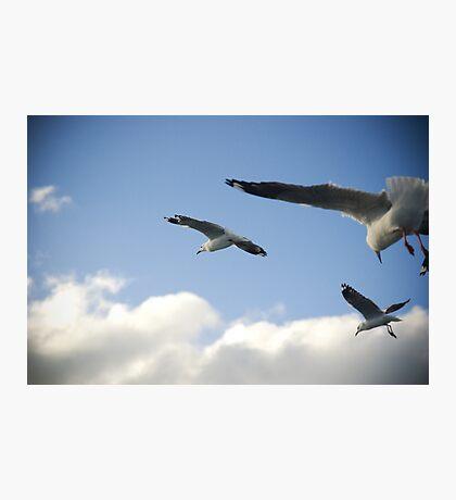 seagull squadron Photographic Print