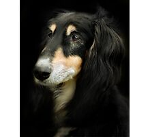 The Saluki Photographic Print