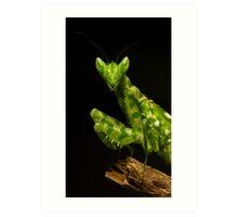 Flower Mantis Beauty Shot Art Print