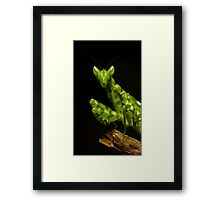Flower Mantis Beauty Shot Framed Print