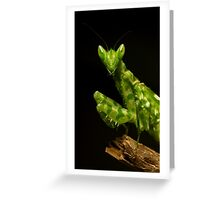 Flower Mantis Beauty Shot Greeting Card