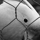 Let Me Out! (Black & White) by Michael Eyssens