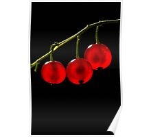 Red Currant Berries Poster
