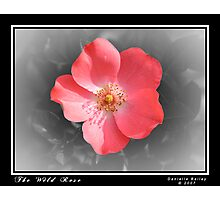 The Wild Rose Photographic Print