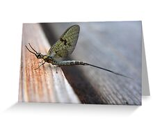 MayFly Greeting Card