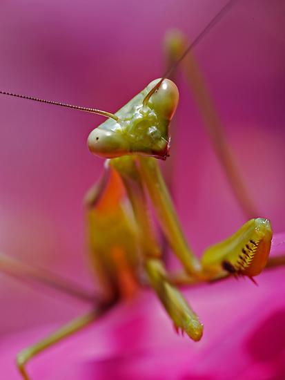 Pretty in Pink by Frank Yuwono