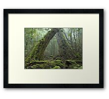 Ancient Rainforest Framed Print