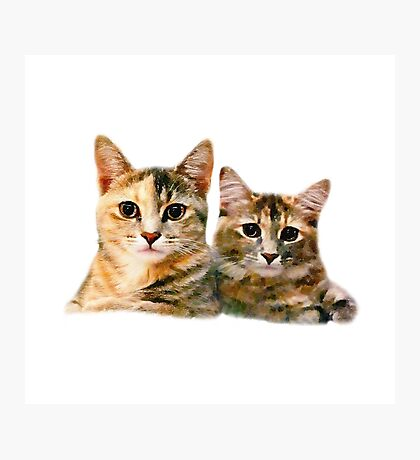 Kitten Canoodle Photographic Print
