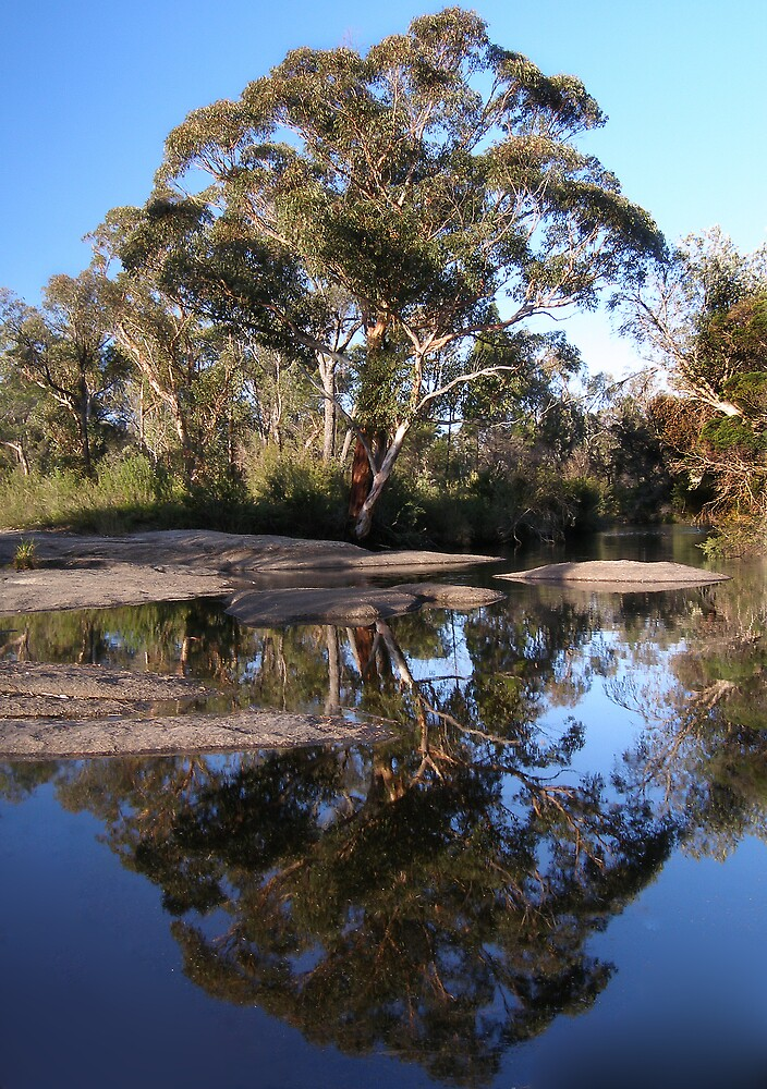 Reflections on a tree by David James