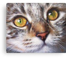 Tabby look Canvas Print