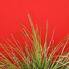 Red wall, little garden. by Michael Eyssens