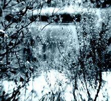 Blue Waterwood by Helen  Page