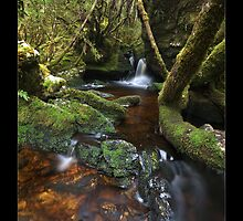 Rainforest Stream by Ian Stewart