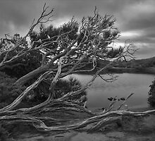 Perdition Ponds - B&W by Ian Stewart