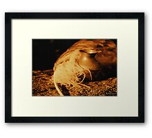Just Write Framed Print