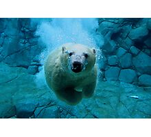 Polar Bear Dive Photographic Print