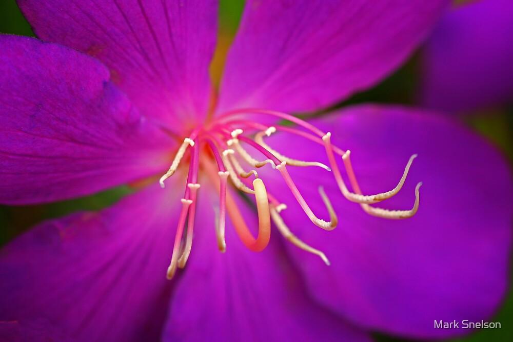 Purple Flower 3 by Mark Snelson