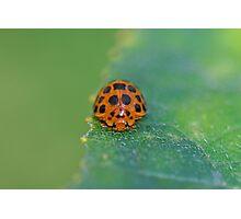 Ladybug 5 Photographic Print