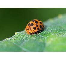 Ladybug 6 Photographic Print