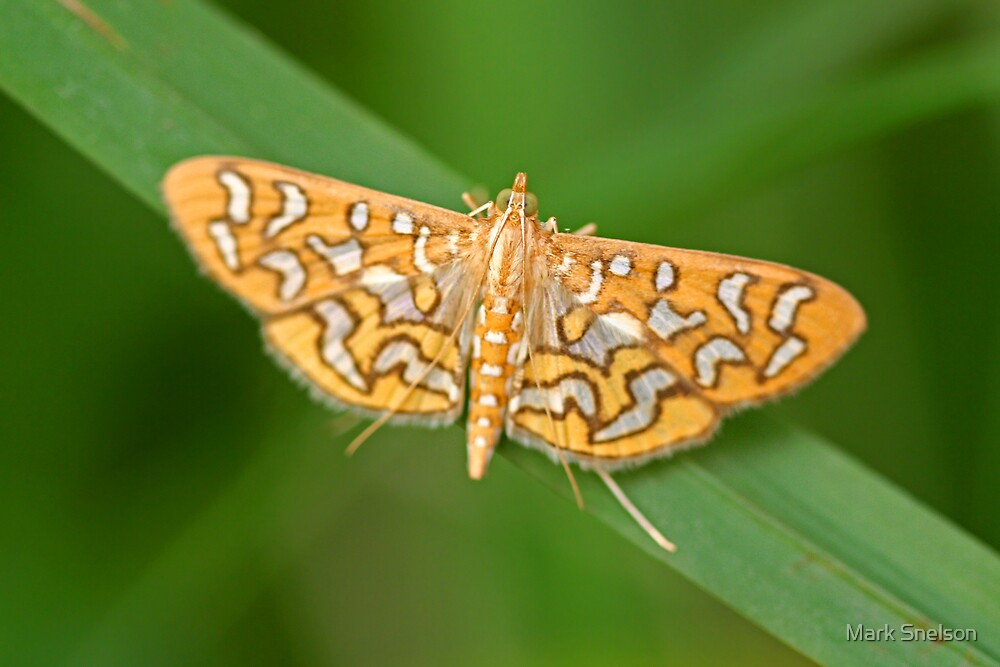 Moth 5 by Mark Snelson