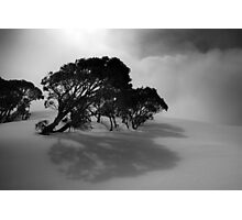 Snow Gums in the Clouds Photographic Print