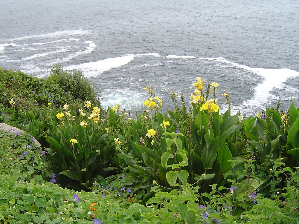 Cliff gardens by judy