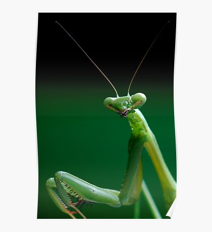 False Garden Mantis Poster