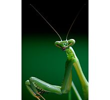 False Garden Mantis Photographic Print