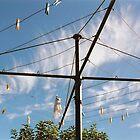 Clothes Hanger by Jessie Evans