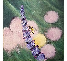 Bee gathering pollen on lavender Photographic Print