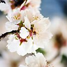 Flowering Almond and Friend by georgiegirl