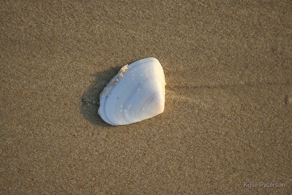 Shell in the sand 11 by Kylie Paterson