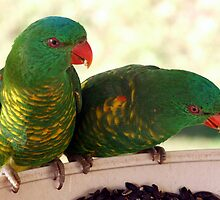 Lorikeets by Keith Spencer