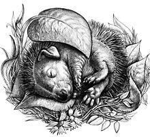 Baby hedgehog sleeping by elinakious