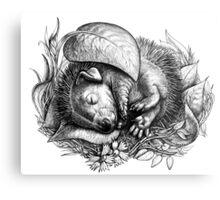 Baby hedgehog sleeping Metal Print